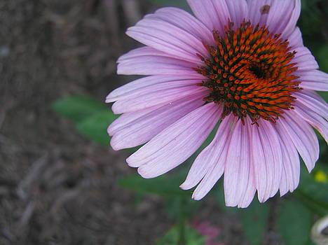 Flower by Kim Dahn