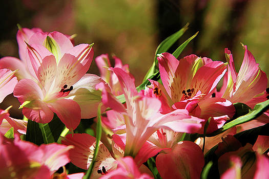 Flower Landscape by Kip Krause