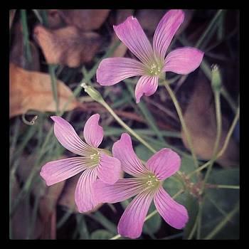 #flower #like #love #follow #followme by Shyann Lyssyj