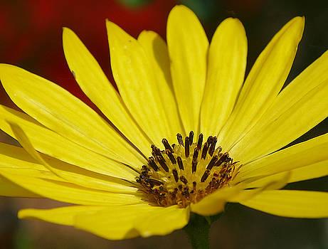 Flower Macro 1 by Bob Mintie