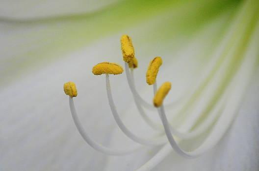 Flower Macro 1 by Jennifer Englehardt