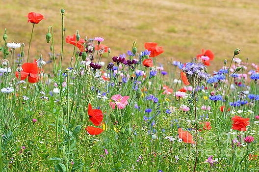 Flower Meadow by Andy Thompson