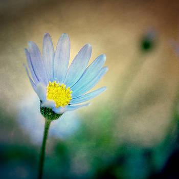 Flower by Mickael PLICHARD
