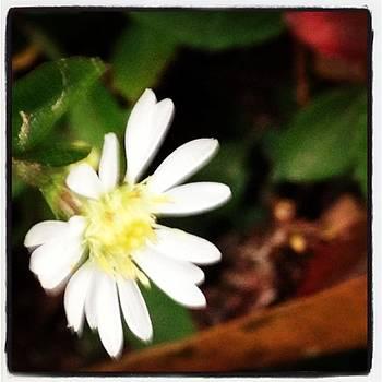 #flower #nature #love #cute #follow by Shyann Lyssyj