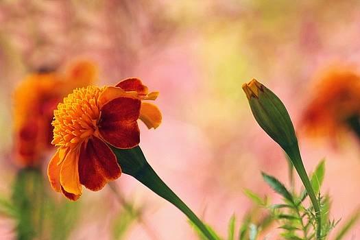 Flower of Fall by Jim  Darnall