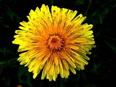 Flower of Garden by Cesar  Vieira