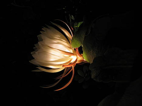 Flower of the Night 03 by Andrea Jean