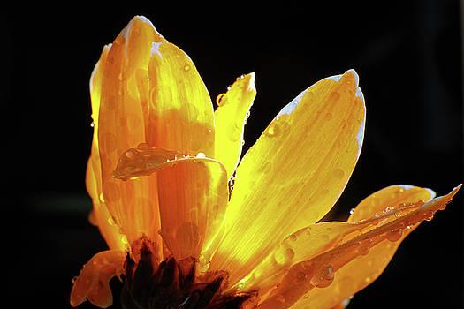 Flower On Fire by Juan Correa