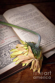 Flower on old Bible by Edward Fielding