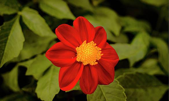 Flower on top by Alexander Mandelstam
