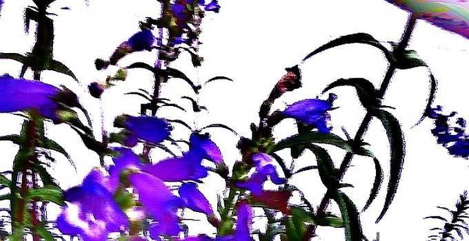 Jamey Balester - Flower Pattern