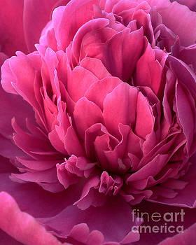 Ramneek Narang - Flower Petals