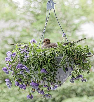 Flower Pot Bird by Frank Freni