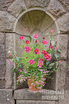Sophie McAulay - Flower pot in stone wall alcove