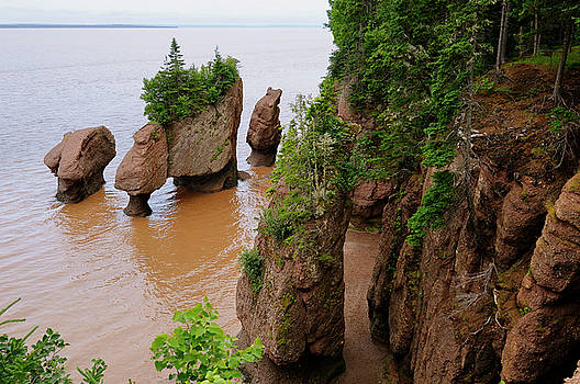 Reimar Gaertner - Flower Pot sea stacks with incoming tide at Hopewell Rocks Bay o