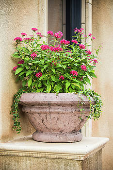Flower Pot by Valerie Loop