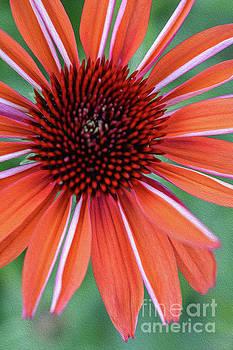Flower Power 5 by Lisa Kilby