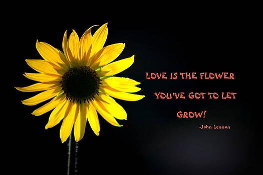 Fiona Kennard - Flower Power