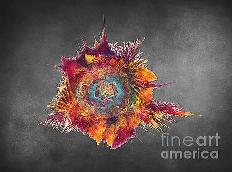 Justyna Jaszke JBJart - Flower Power Fractal Art