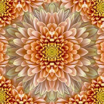 Sumit Mehndiratta - flower power