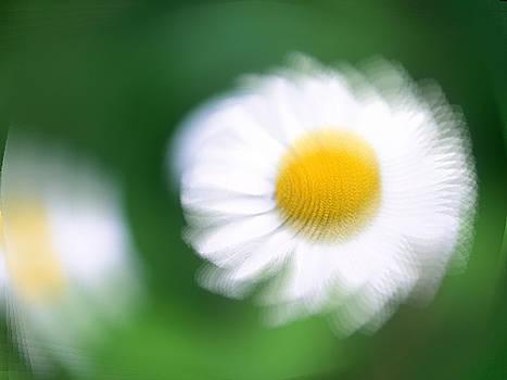 Flower by Prakash Kandk