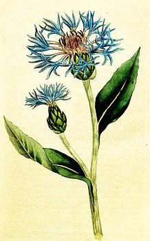 Ramneek Narang - Flower