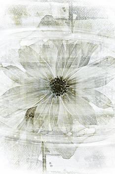 Frank Tschakert - Flower Reflection
