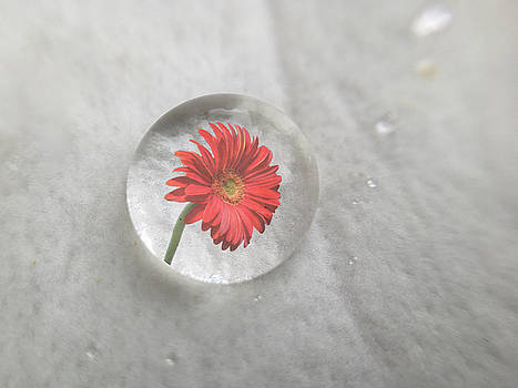 Flower reflection by Paulo Goncalves