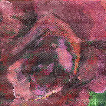 Flower Rose by Kathleen Barnes