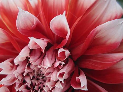 Flower by Senada Bukinac