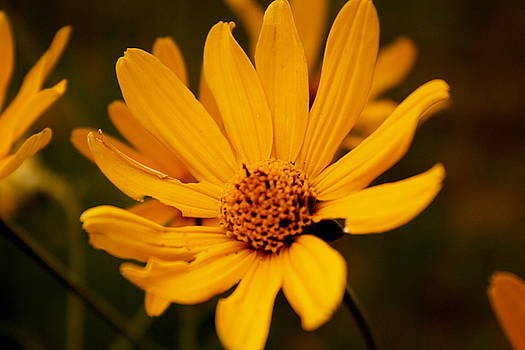 Sherri Williams - Flower