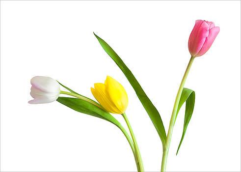 Flower Shop Wall Art - Colorful Tulips by Ram Vasudev