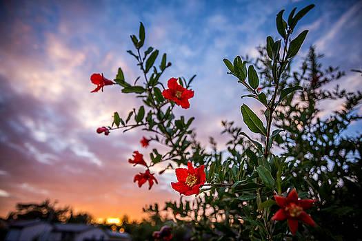 Flower Sunset by Anton Tolok
