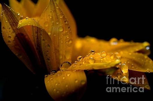 Flower by Sylvie Leandre