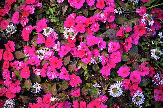 Michael Bessler - Flower texture