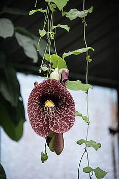 Flower Vine by Michael Bessler