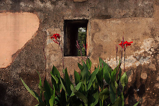 Flower Wall by Jed Holtzman