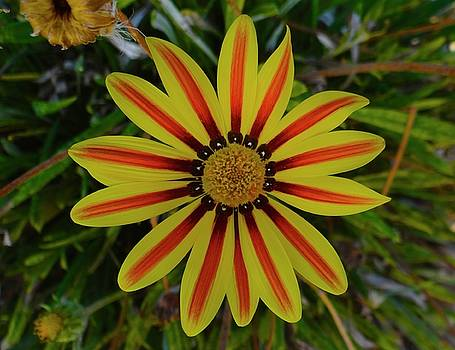 Flower with stripes by Exploramum Exploramum