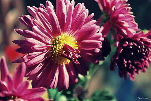 Flower within by Marija Djedovic