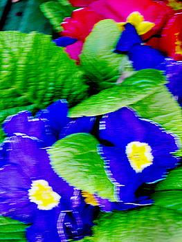 Flower0 by Mikael Gambitt