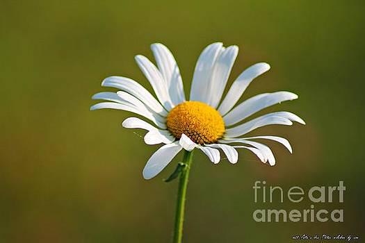 Flowerd by Olivia Narius