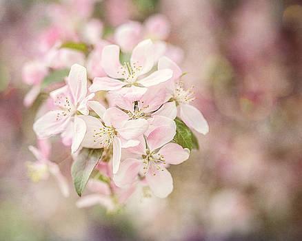 Lisa Russo - Flowering Apple