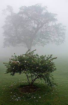 Flowering bush and tree in mist on grounds of Taj Mahal, Agra, I by Beth Partin