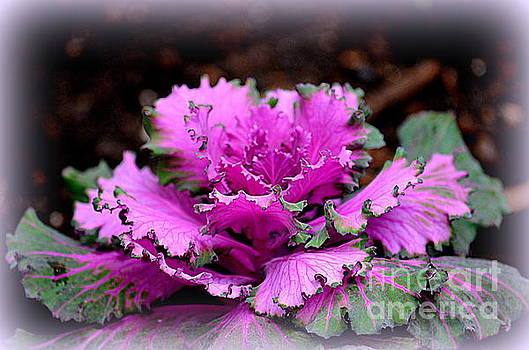 Flowering Cabbage by Jaunine Roberts