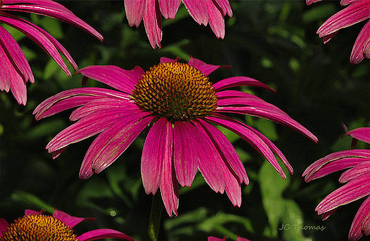 Flowering Cone Plants by James C Thomas