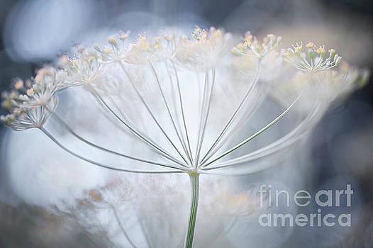Flowering dill details by Elena Elisseeva