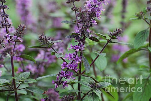 Flowering Garden with Lavender Flowers by DejaVu Designs