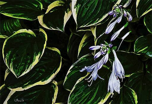 Bill Linn - Flowering Hosta