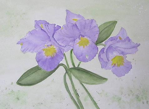 Flowering Orchids by Elvira Ingram