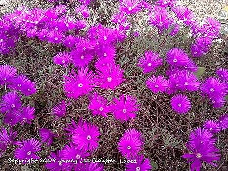 Jamey Balester - Flowering Suculants